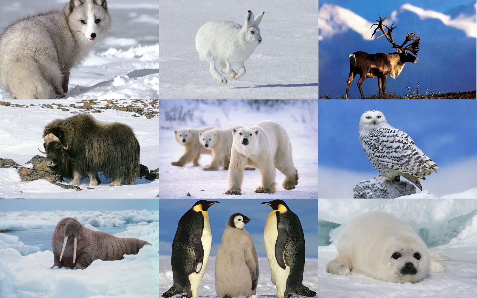 7 Animals To See In The Arctic